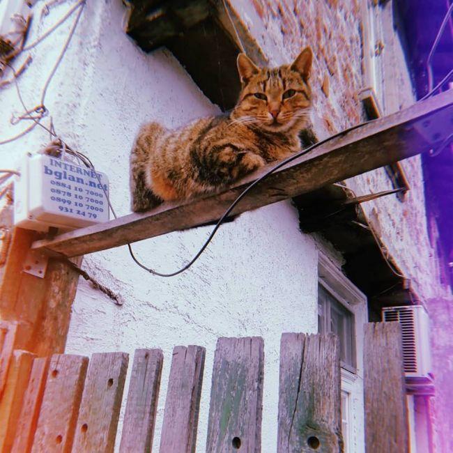 О красоте, морщинках и котиках