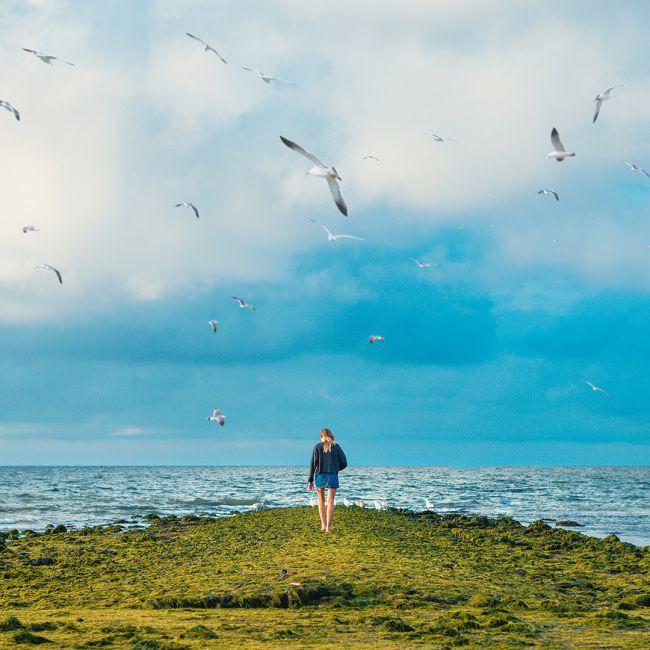 О птицах и людях