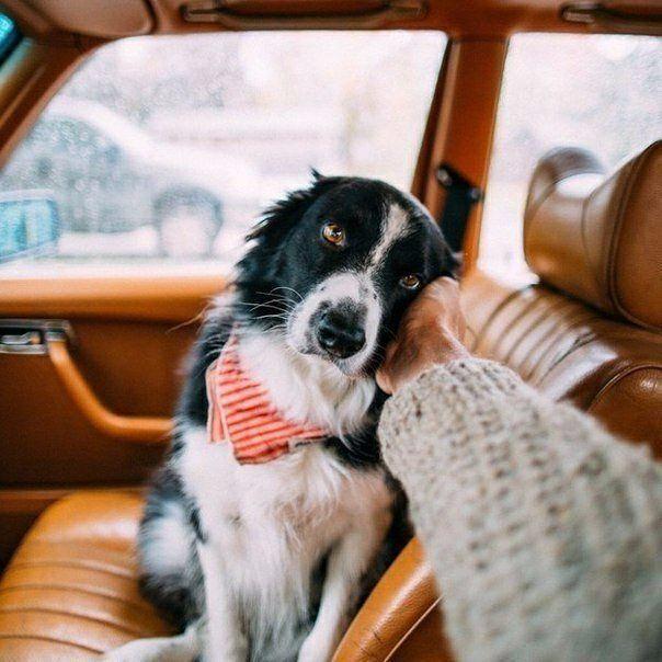 Работают ли Гештальт-терапевты с животными?