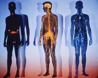 Тело в гештальт-терапии