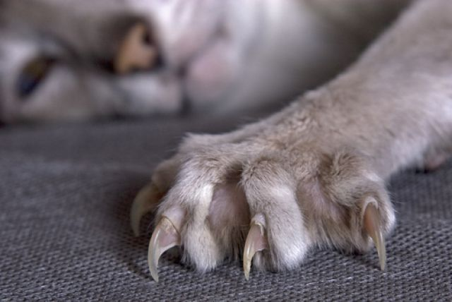 Насилие на мягких кошачьих лапах.