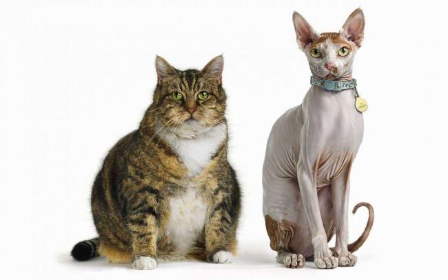 Авторская стратегия похудения. Психология лишнего веса.