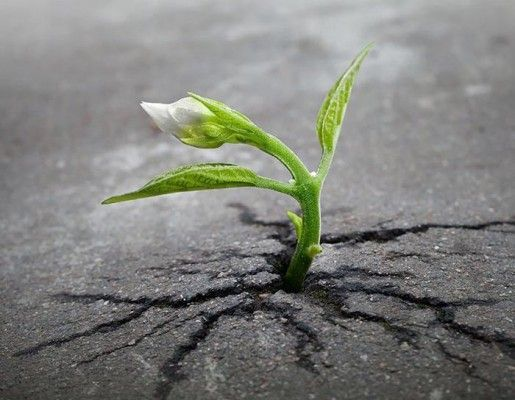 Изменить себя нельзя, но можно не мешать себе изменяться